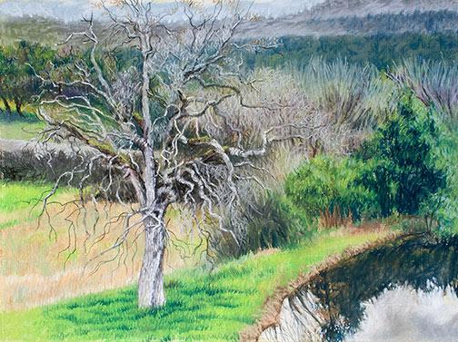 Bare Tree & Pond Image
