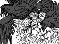 Raven Sketch Image